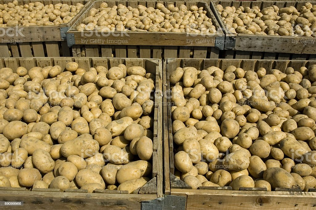 Large bins full of potatoes royalty-free stock photo