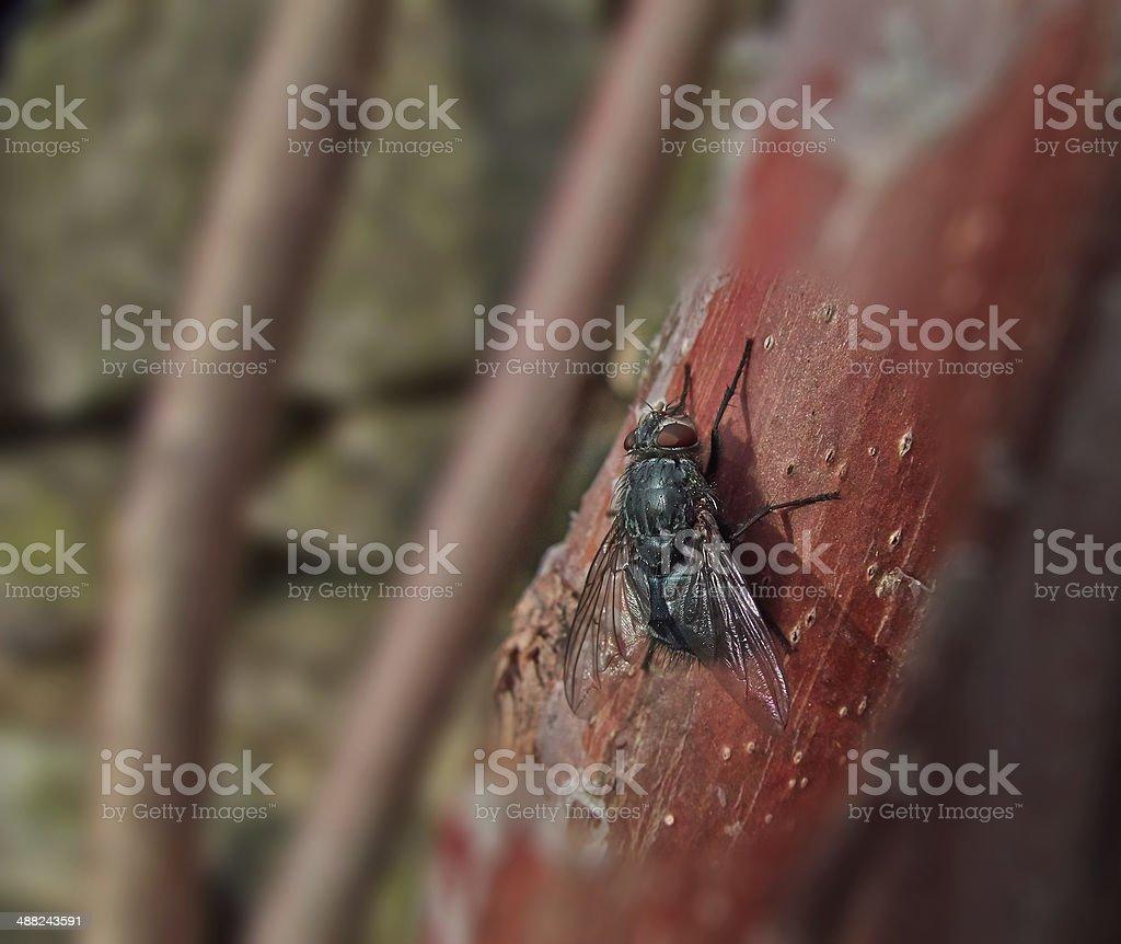 large black fly royalty-free stock photo