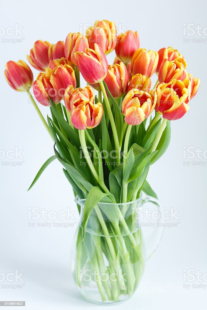 large bouquet of tulips in a glass jug stock photo