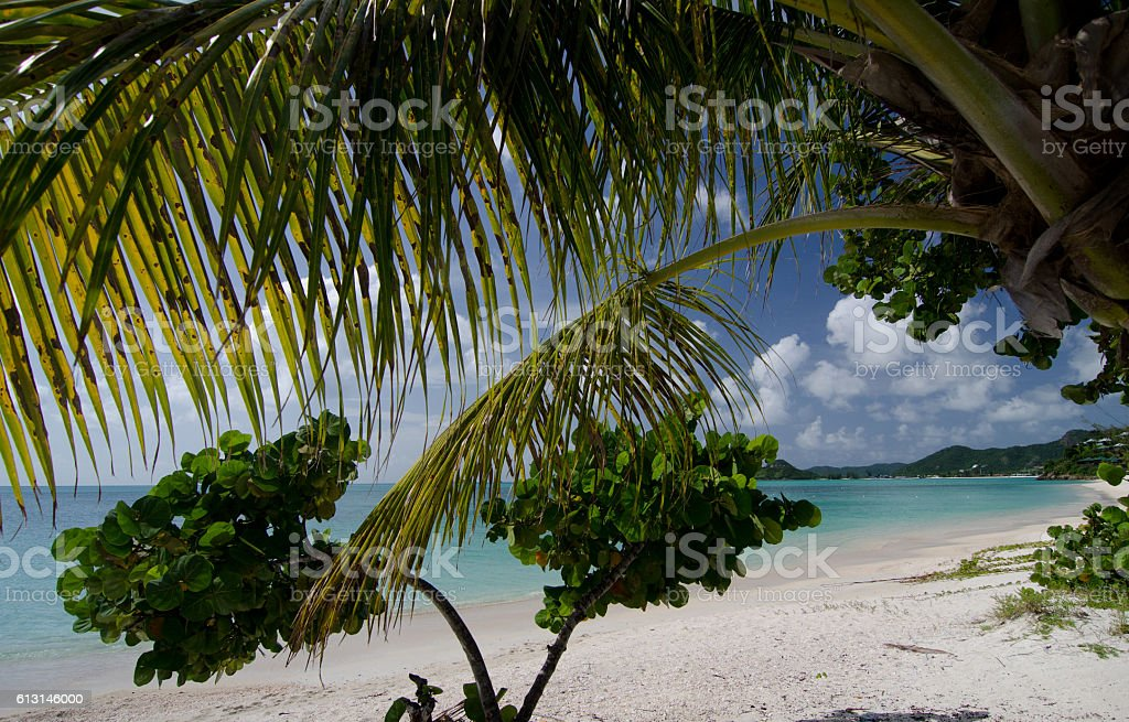 Large branches of seagrape and palm trees at Cocobay beach stock photo