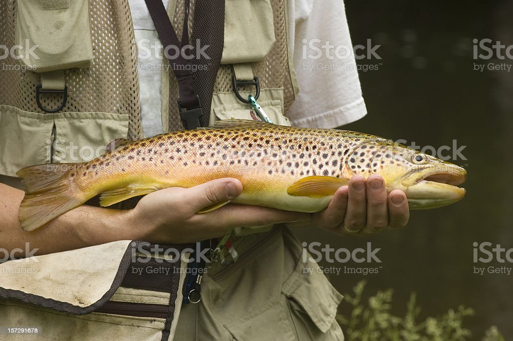 Large Brown Trout stock photo