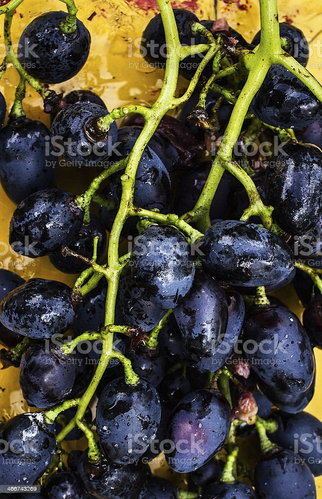 Large bunch of red wine grapes on art painted wooden royalty-free stock photo