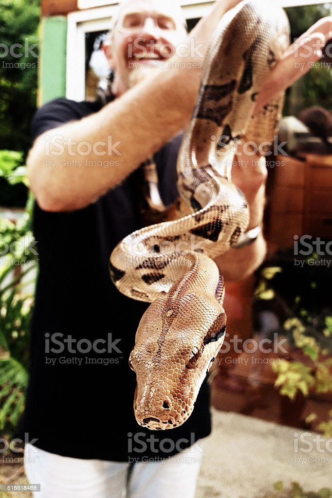 Large Burmese python held by smiling man stock photo