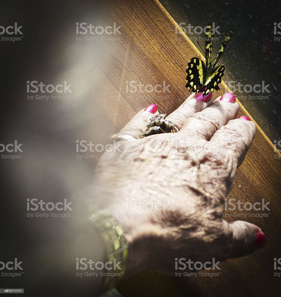Large butterfly on woman's hand stock photo