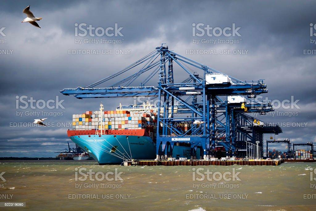 Large cargo ship with flying seagulls at Felixstowe stock photo