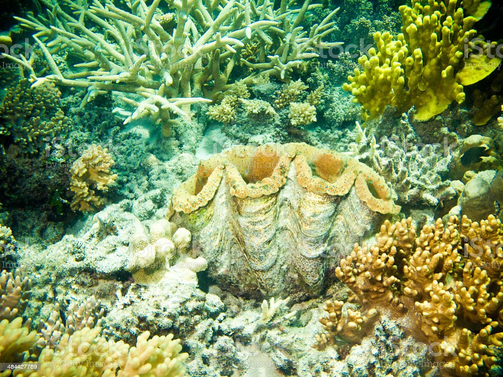 Large clam with corals and sponges royalty-free stock photo