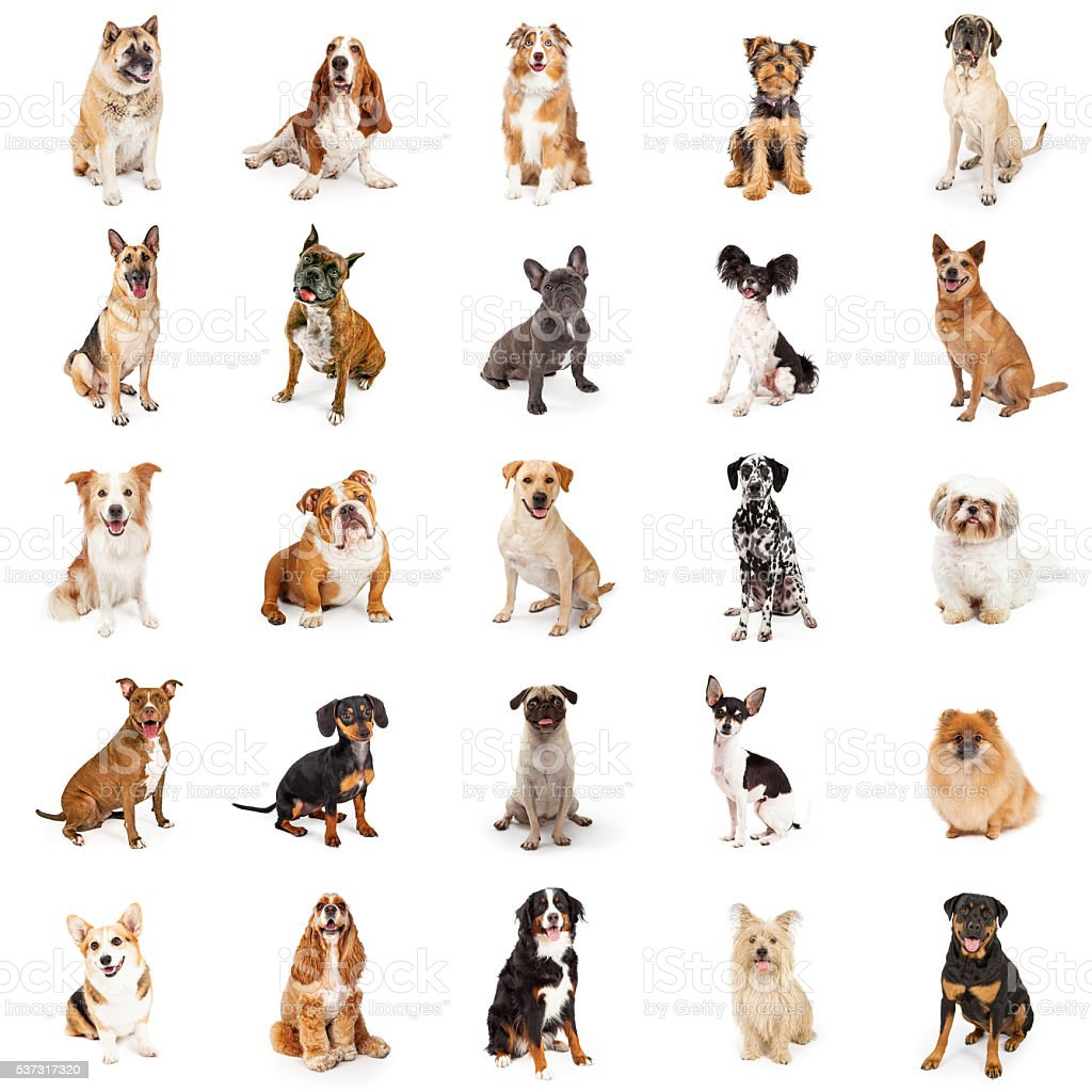 Large Collection of Common Breed Dogs stock photo