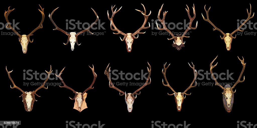large collection of hunting trophies on black background stock photo