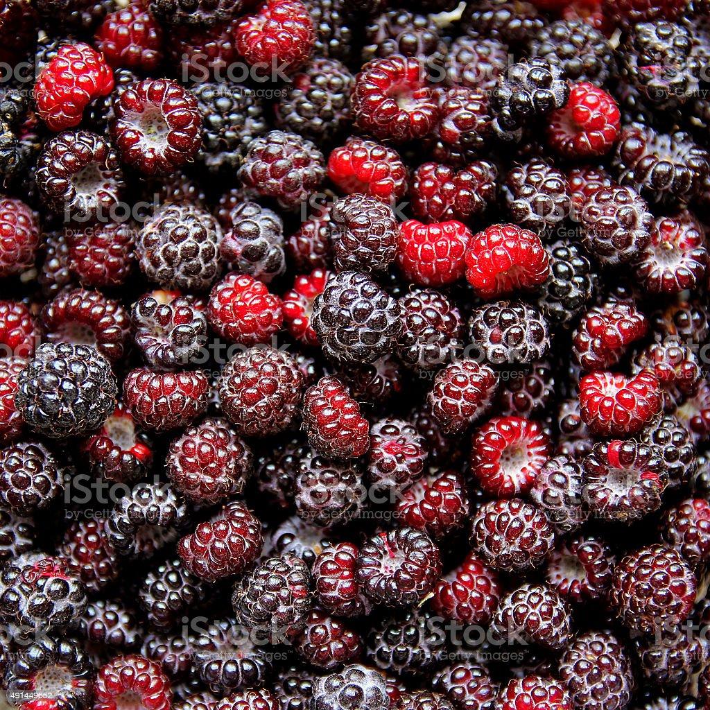 Large Collection on Fresh Black Cap Raspberries stock photo