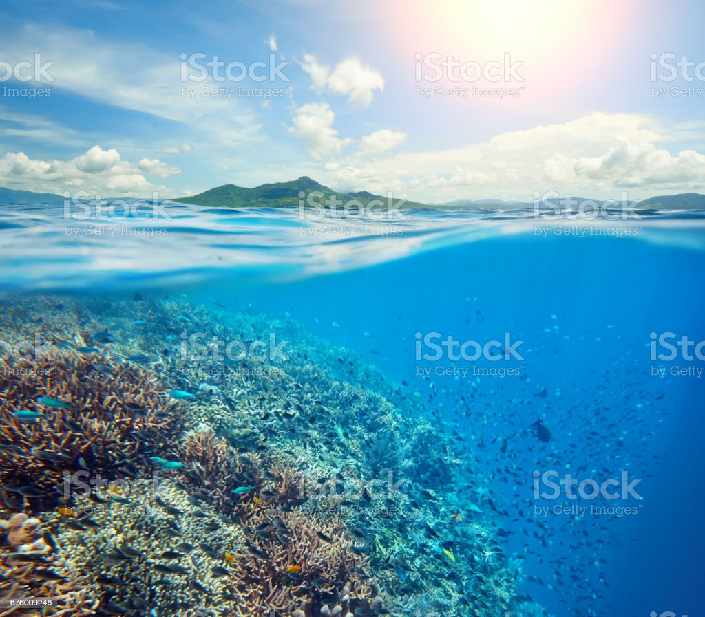 Large coral reef in tropical sea background of island stock photo