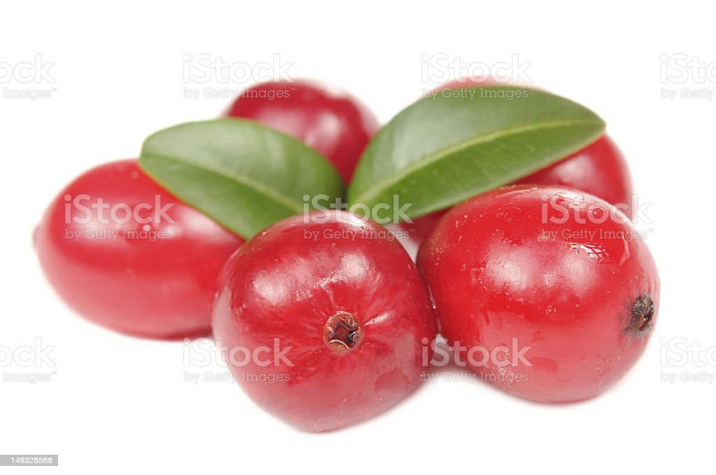 Large Cranberries with Green Leaves stock photo