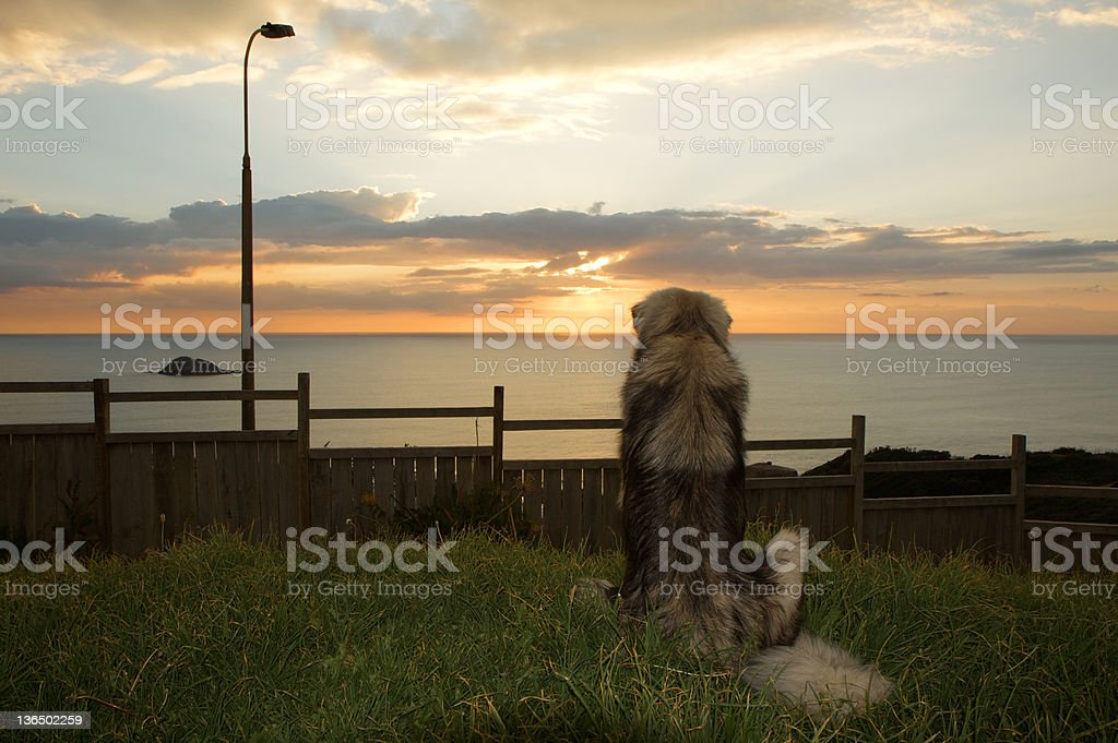Large Dog stock photo