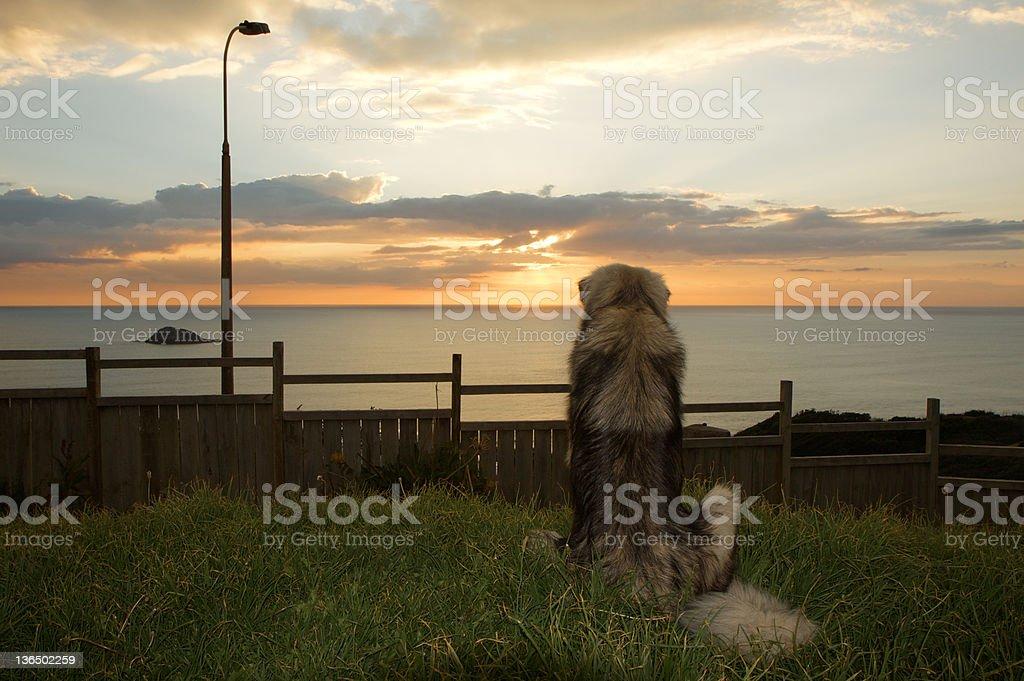 Large Dog stock photo