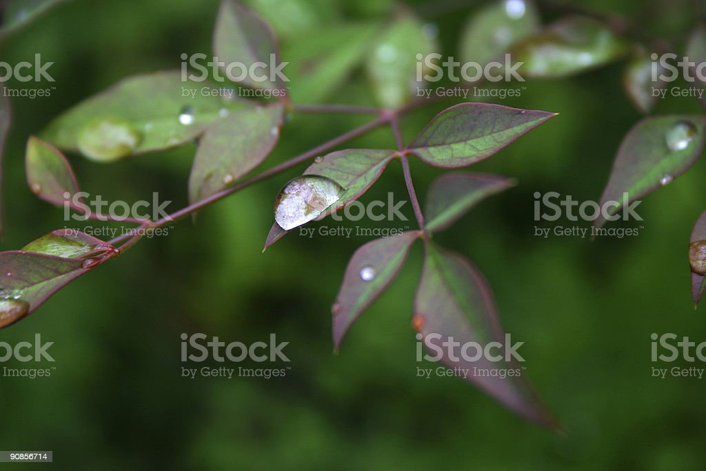 large droplet on edge of leaf royalty-free stock photo