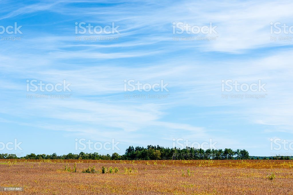 Large empty field ending at tree line under cirrus clouds stock photo