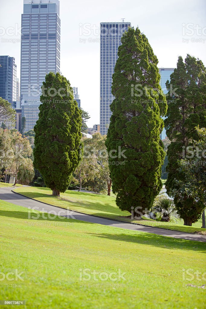 Large Evergreen Trees Royal Botanic Garden Sydney stock photo