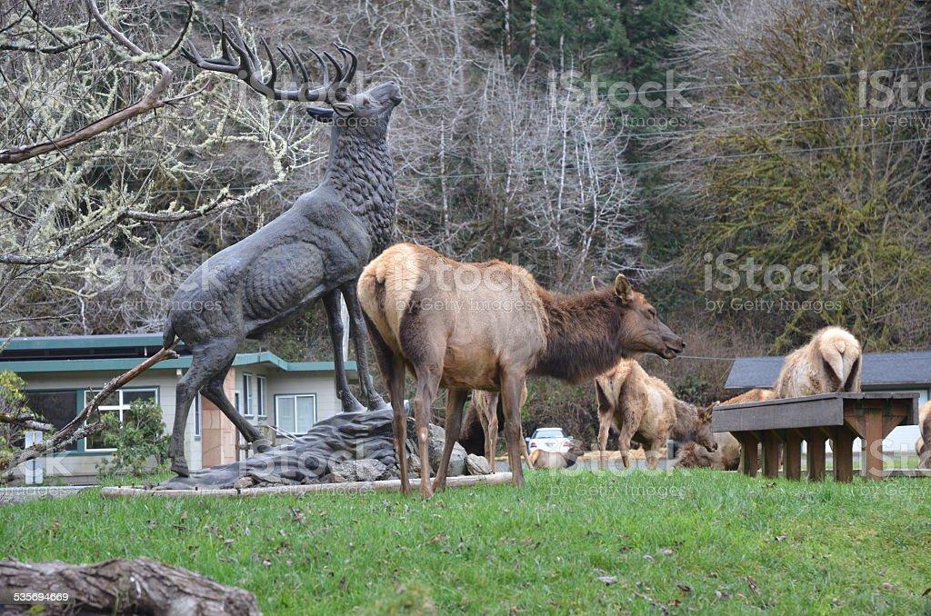 Large Female Elk Grazing Next to Bull Elk Statue royalty-free stock photo