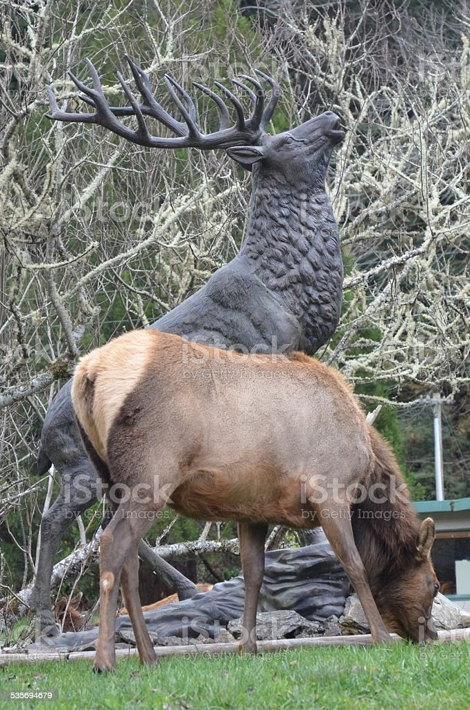 Large Female Elk Grazing Next to Bull Elk Statue royalty-free stock photo