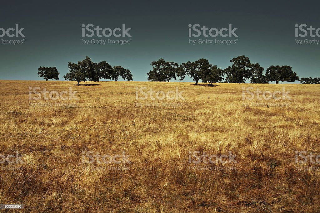 Large Field with a Cluster of Trees royalty-free stock photo