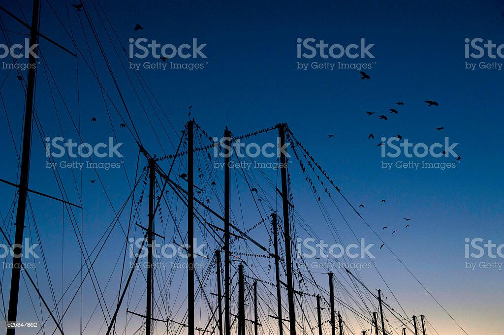 large flock of crows flying over yachts stock photo