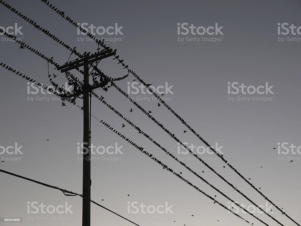 Grand troupeau de Starlings sur les lignes électriques crée motif Unique photo libre de droits