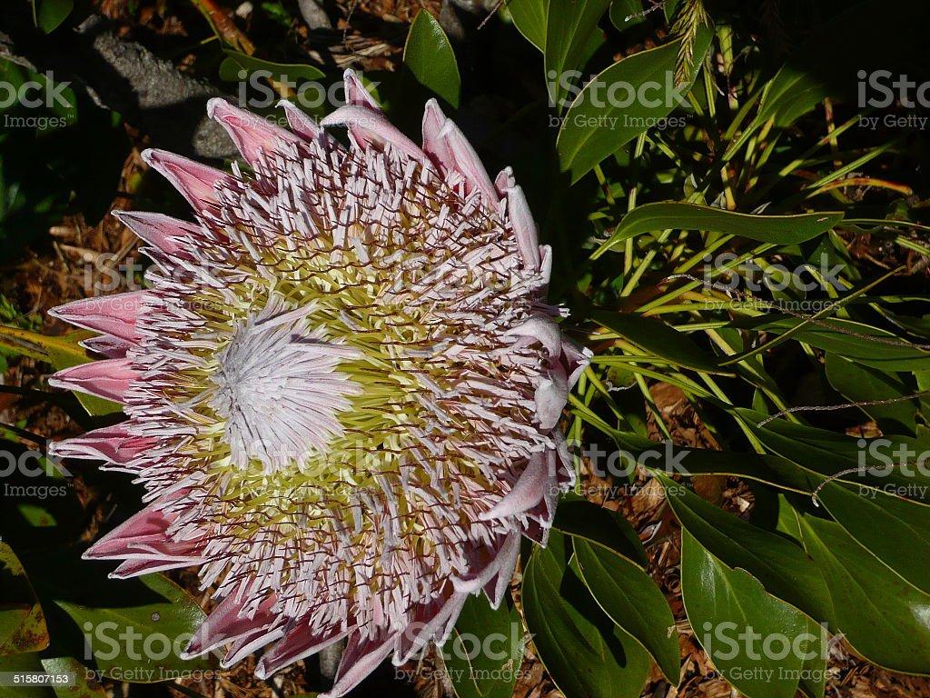 large flower royalty-free stock photo