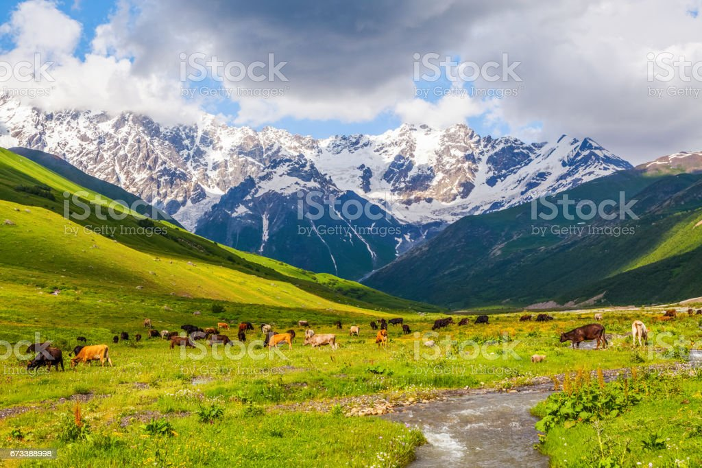 Large green lawn covered with green grass, and all around stand high mountains in snow and beautiful sky on a summer day. Upper Svaneti, Georgia, Europe. stock photo