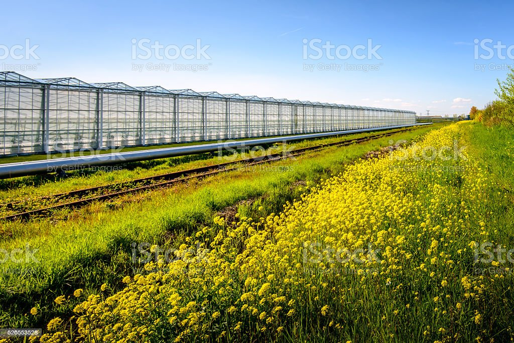 Large greenhouse on a sunny day in spring stock photo