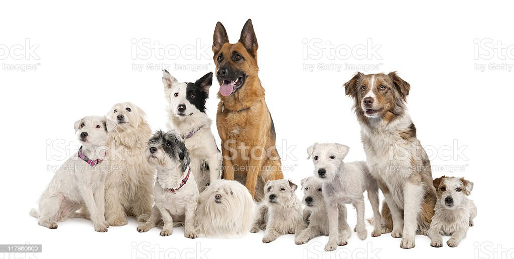 Large group of dogs royalty-free stock photo