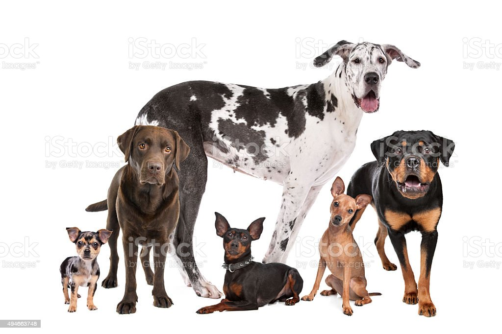 large group of dogs stock photo