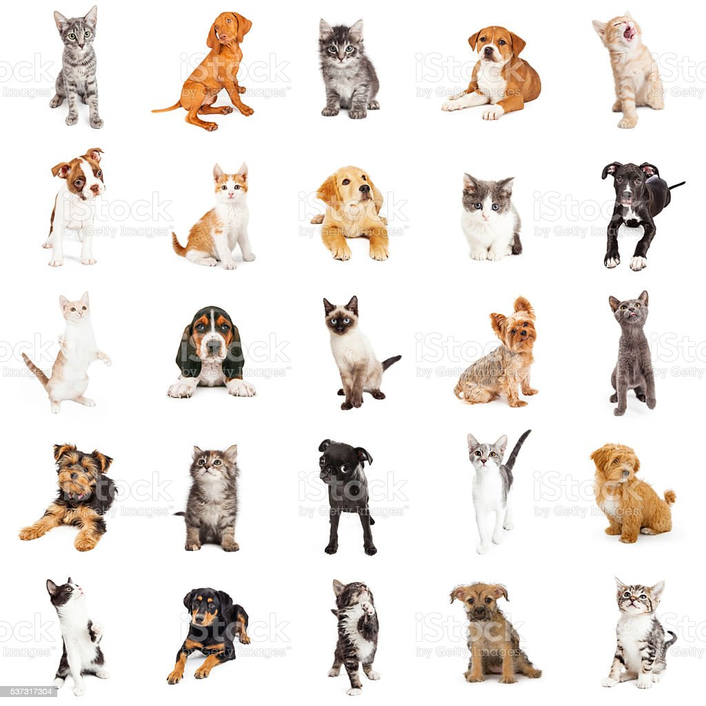 Large Group of Puppies and Kittens stock photo