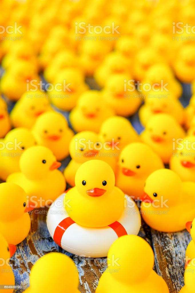 Large group of yellow rubber ducks gathering around another yellow duck that is sitting on a life saver rubber ring, on a blue weathered wooden table background. stock photo