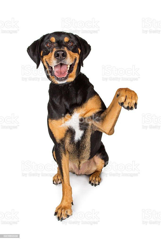 Large Happy Dog Lifting Arm Up stock photo