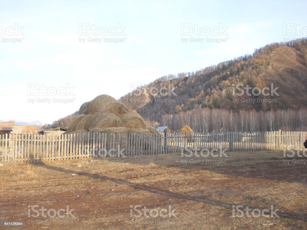 Large haystacks round handled autumn afternoon in the countryside, Altai territory stock photo