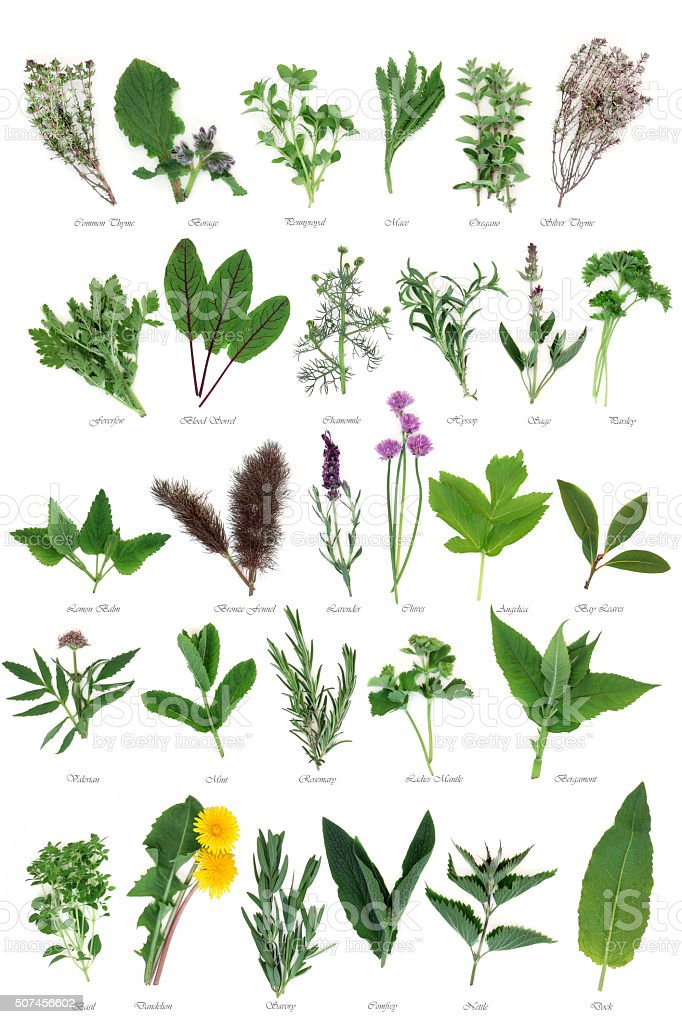 Large Herb Selection stock photo