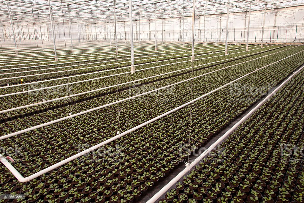 Large Industrial Nursery Greenhouse stock photo