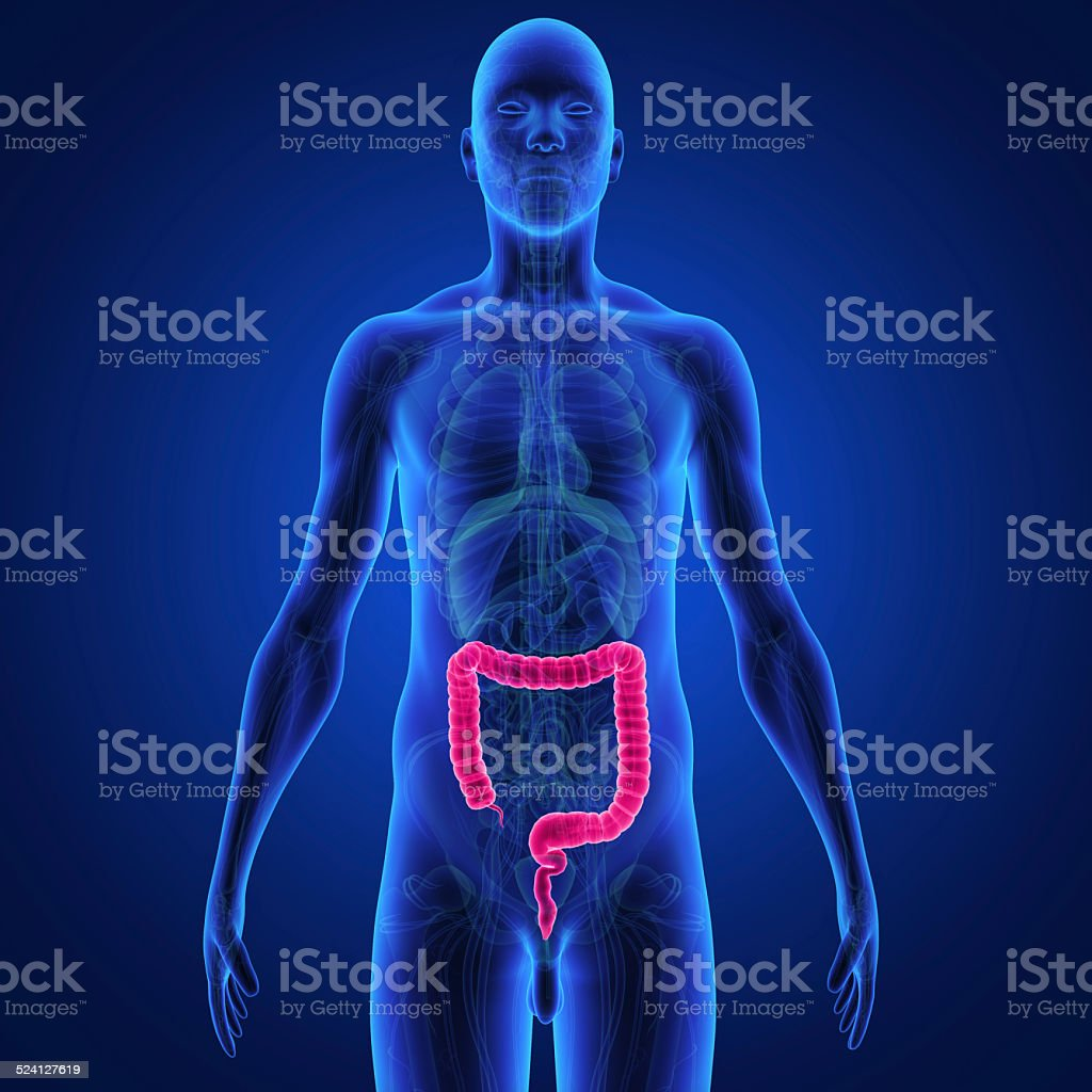 Large intestine stock photo