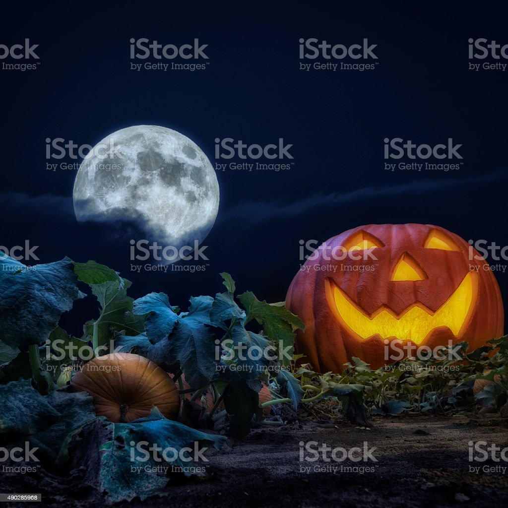 Large Jack O' Lanter in pumpkin patch field at night stock photo