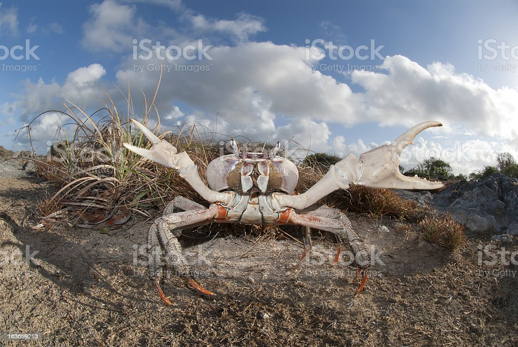 large land carb stock photo