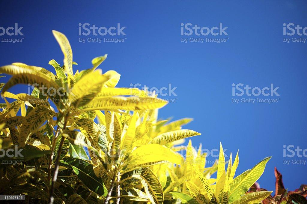 Grande plante plaquée & ciel bleu photo libre de droits