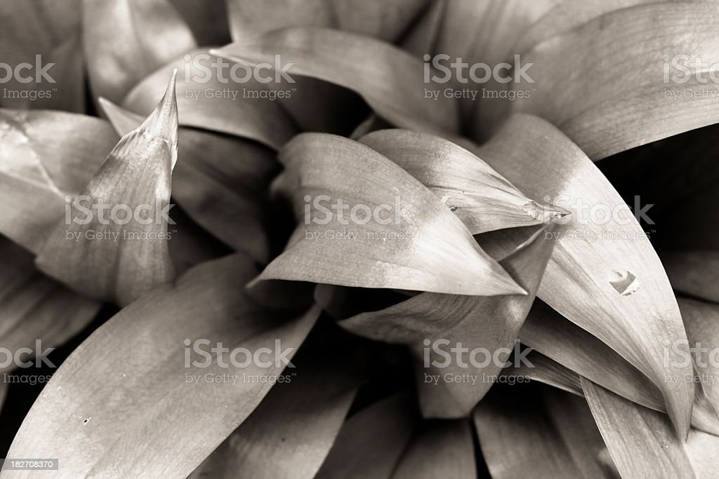 Large leaves close-up - textured natural backdrop royalty-free stock photo