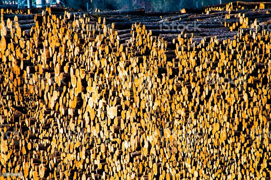 Large Logging pile royalty-free stock photo