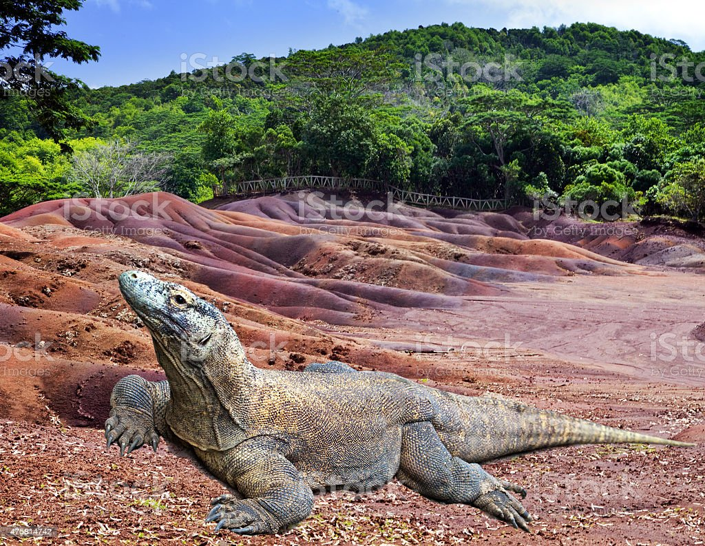 Large monitor lizard on multi color sand stock photo