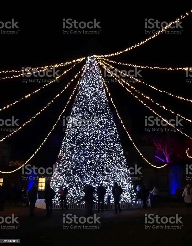 Large outdoor Christmas tree with fairy lights / decorations, people watching stock photo