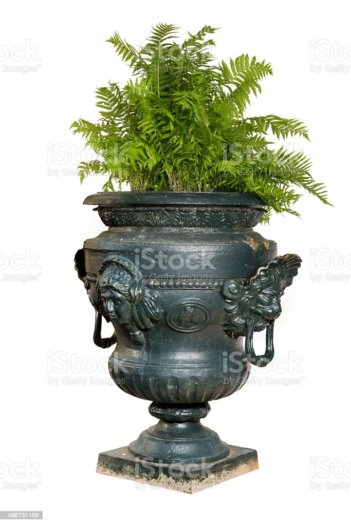 large painted blue iron garden urn with fern plant stock photo