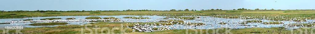 Large Panorama With Many Species Of Birds At Wildlife Refuge stock photo