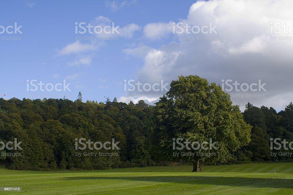 Large Park, Big Tree royalty-free stock photo