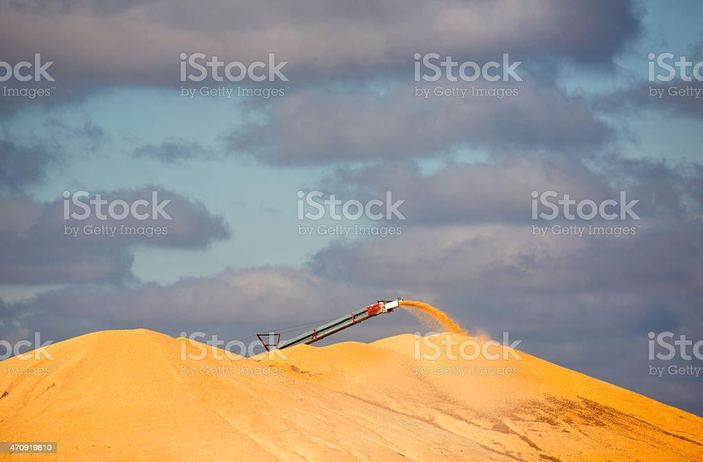 Large Pile of Corn At Midwest Ethanol Plant. stock photo