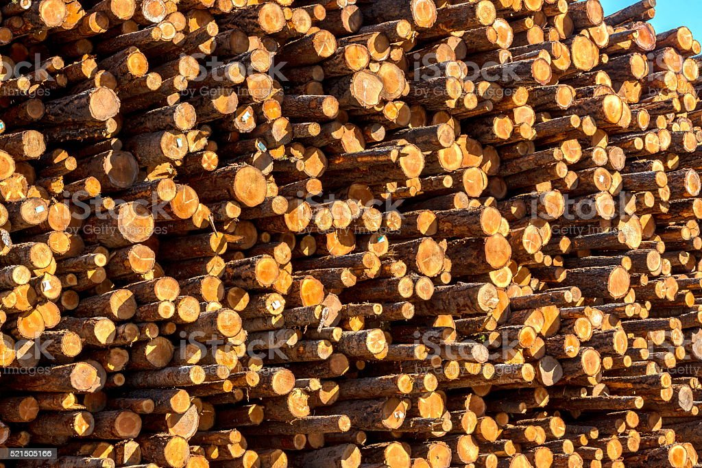 large pile of logs stock photo