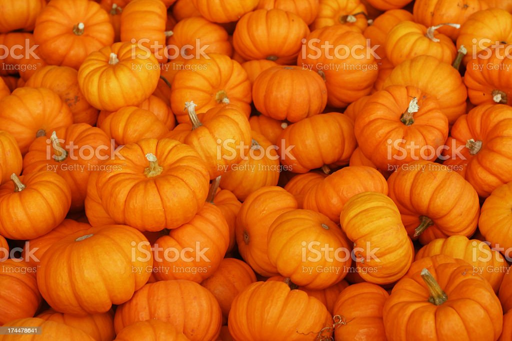 A large pile of small and orange pumpkins stock photo